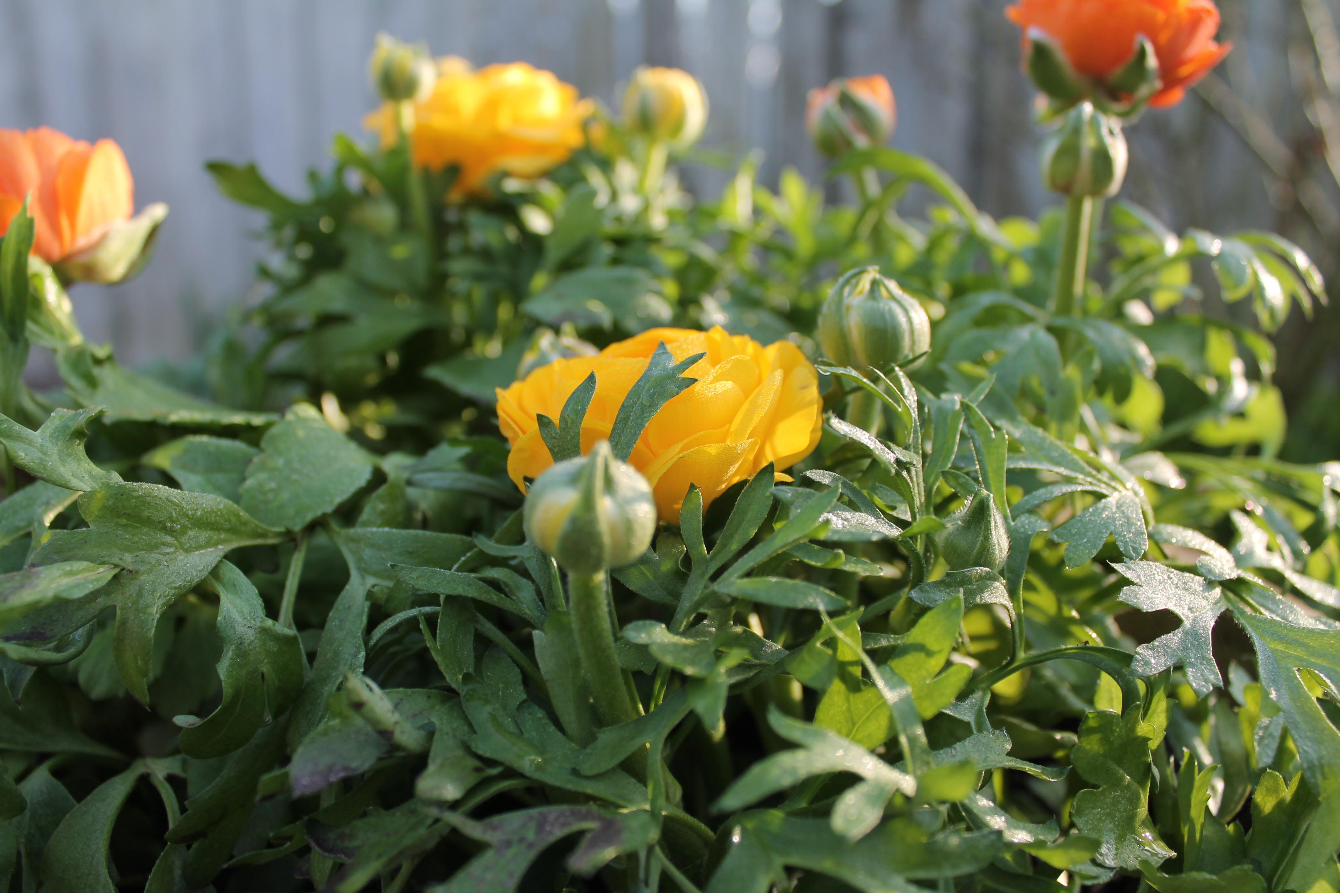 Så blev det forår – og det er helt gratis!