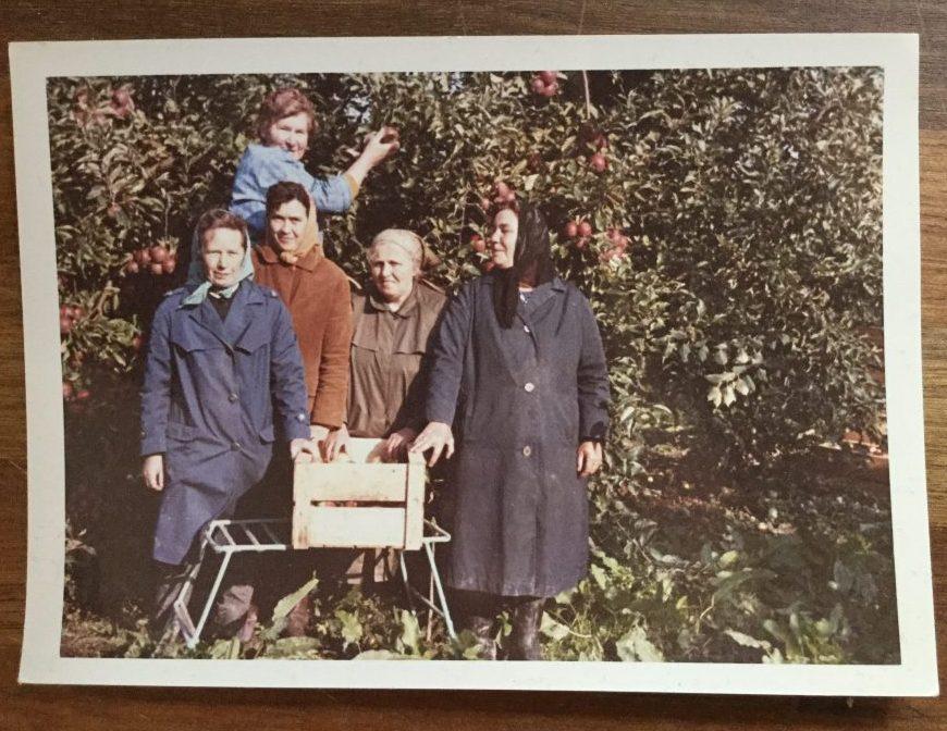 Mormor som æbleplukker